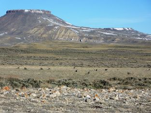800px-Greater_Sage-Grouse_in_Red_Desert,_WY_(7487155676)
