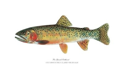 rio-grande-cutthroat-small