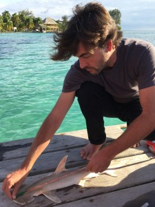 Demian Chapman examines a specimen of what is believed to be an unidentified species of hammerhead shark. Credit: Florida International University